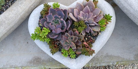 SOLD OUT! Valentine Succulent Planters at Ciao Bella tickets