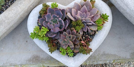 SOLD OUT! Valentine Succulent Planters at Ciao Bella