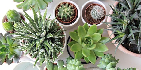 Plant 101 - Growing & Caring for Succulents tickets