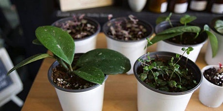 Seed and Soul 2020 Spring Plant Swap tickets