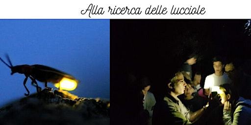 Passeggiata con le lucciole in Caffarella