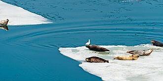 Ocean Wildlife of alaska and Antartica