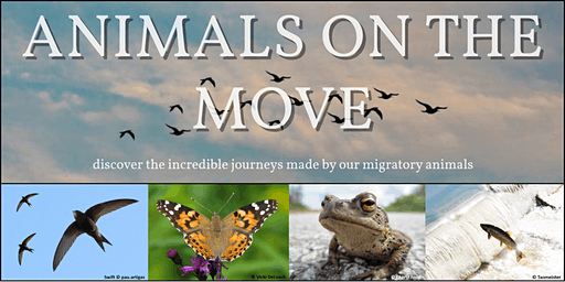 Animals on the Move Exhibition