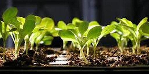 Seed Starting Basics Class