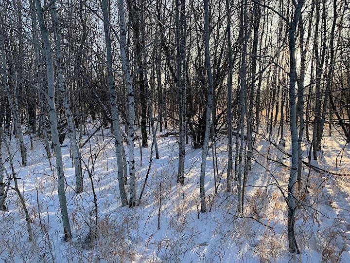 Saskatoon's World Famous Conservationist: Richard St. Barbe Baker image