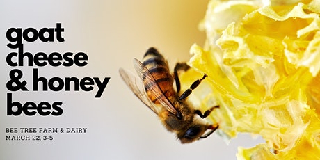 Honey and Cheese Tasting with Bee Tree Farm & Two Hives Honey tickets