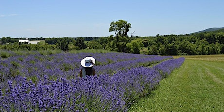 Maryland Lavender Festival at Springfield Manor Winery, Distillery, & Brewery 6/13 tickets