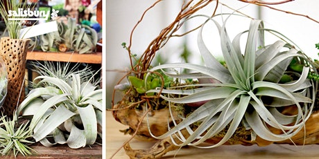 Driftwood Airplant Design tickets