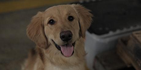 Puppy Class 2020 - Athens, GA tickets
