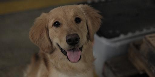 Puppy Class 2020 - Athens, GA