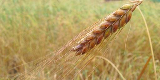 Workshop De kracht van graan