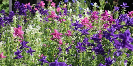 Sow your own cut flower patch tickets