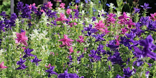 Sow your own cut flower patch