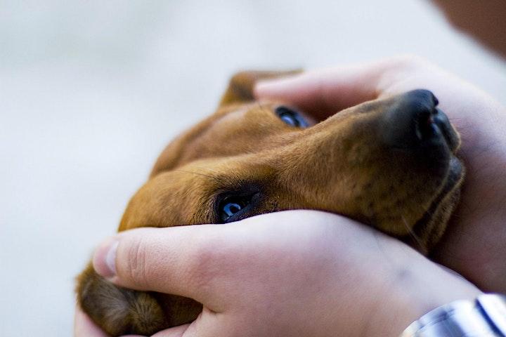 Immagine APERICERCA --- 20  Febbraio 2020 --- Il dolore negli animali