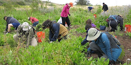 Volunteer Opportunity at Yerba Mansa Meadow