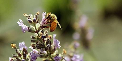 COMB Beginner Bee School