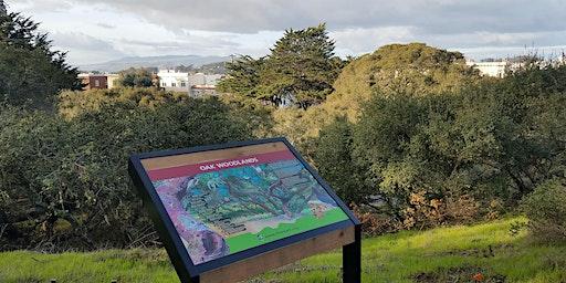 Oak Woodlands in Golden Gate Park