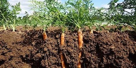 Soil Testing for your Veggie Garden tickets