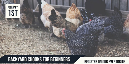Backyard Chooks for Beginners Workshop