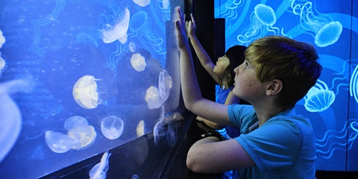 Teacher Event - SEA LIFE Melbourne  Aquarium