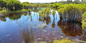 2020 WA Wetland Management Conference: call for...
