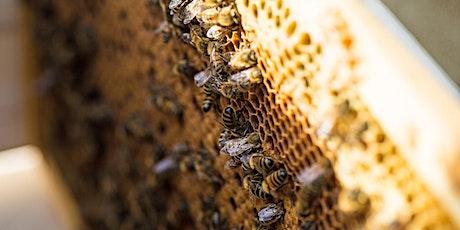 Atelier Bee to Bee : Junior billets