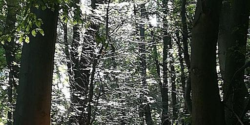 Mit Schwung ins neue Jahr durch Waldbaden