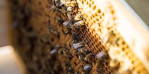 Atelier Bee to Bee : Expert·e·s