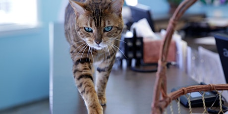 Seminar für Tierärzte in Duisburg 05.02.2020:  Die Katze - das andere Wesen Tickets