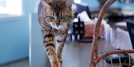 Seminar für Tierärzte in Duisburg 05.02.2020:  Die Katze - das andere Wesen