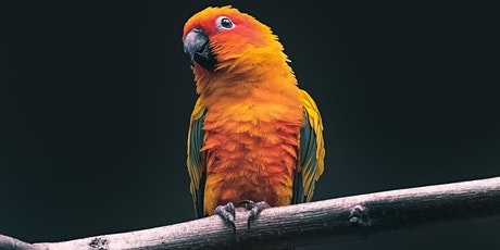 The Exotic Animal Trade: Past and Present tickets