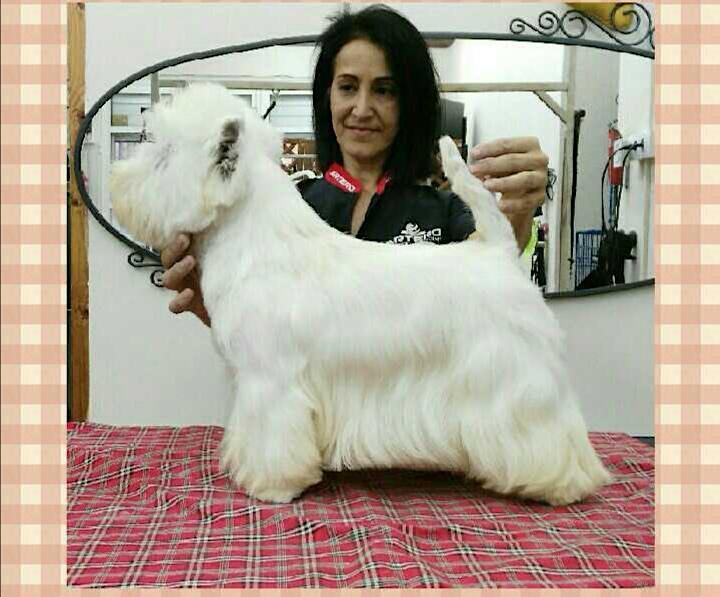 Imagen de Ponencia Terrier con Cármen Sanchez y Cristina Blasco