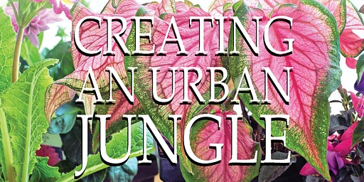 Creating An Urban Jungle