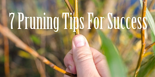 7 Pruning Tips For Success