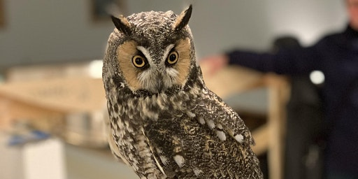 February Owl Prowl with the Center for Wildlife