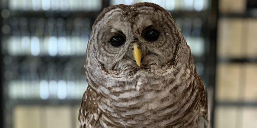 March Owl Prowl with the Center for Wildlife