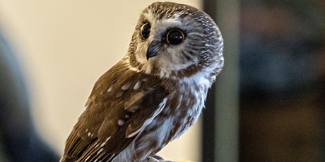 April Owl Prowl with the Center for Wildlife tickets