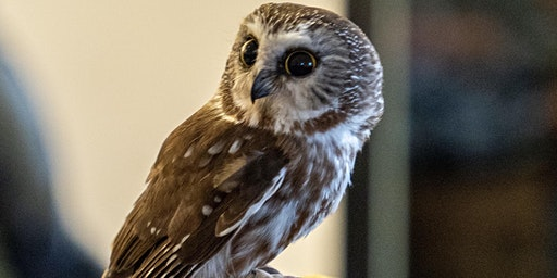 April Owl Prowl with the Center for Wildlife