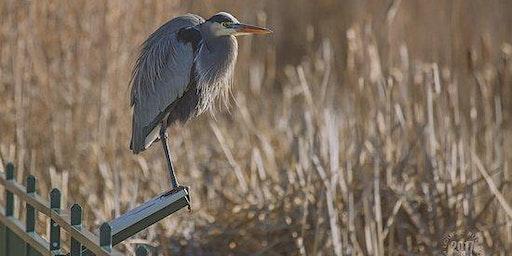 Bird Walk in the Park: Hyatt Hidden Lakes Reserve