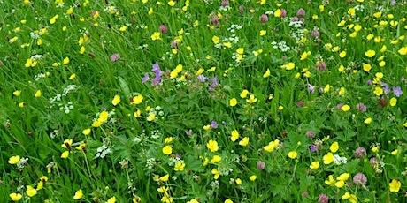 Flowers of Upper Swaledale Ramble tickets