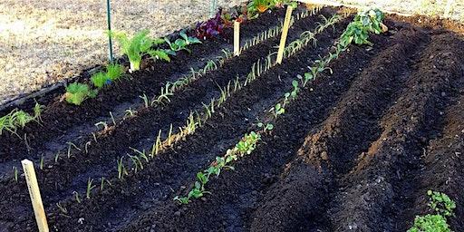 Designing your Vegetable Garden