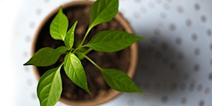 Forge Gardening: Kitchen Herbs for Relaxation