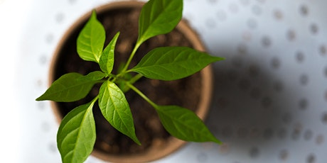Forge Gardening: Kitchen Herbs for Relaxation tickets
