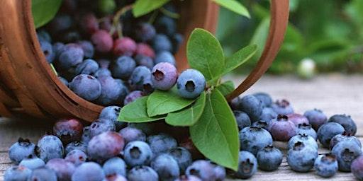 Fresh Backyard Berries