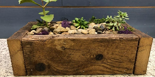 Plant your own Succulents Night at Brewery Fire