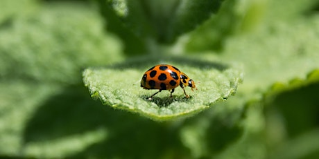 Encouraging beneficial insects to the garden tickets