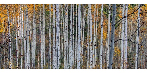 Under the Aspens with Elisabeth Rosenthal, Author of 'An American Sickness'