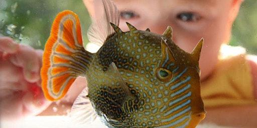 Marine Life Encounter 24 January 2020 - Torquay