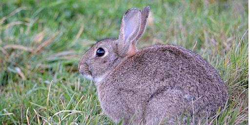 Rabbit Control Workshop