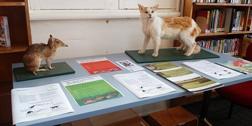 Safe cat, safe native wildlife @Deloraine Library